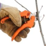 Gloved Hand Using Pruning Shears on a Small Branch